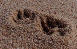 Hundeabdruck auf Strandsand, Nahaufnahme stockbilder