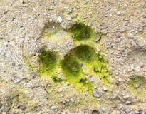Hundeabdruck im Beton in der Natur Stockbild