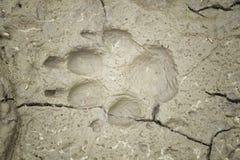 Hundeabdruck im Lehm Lizenzfreie Stockbilder