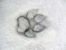 Hundeabdruck im Schnee Stockfotos