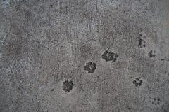 Hundeabdruck im Zement Lizenzfreie Stockfotografie