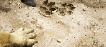 Hundeabdruckland Stockfotografie