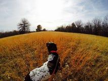 Hundeabenteuer Lizenzfreies Stockfoto