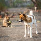 Hundeaufpassender Affe Lizenzfreie Stockfotografie