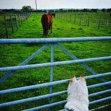 Hundeaufpassendes Pferd Lizenzfreie Stockfotos