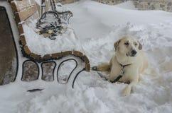 Hundeaufwartung Lizenzfreies Stockbild