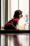 Hundeaufwartung Lizenzfreies Stockfoto