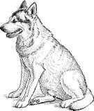 Hundeaufwartung Stockfotos