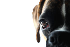Hundeaugen Stockfotos