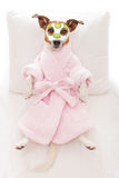 Hundebadekurort Wellness Lizenzfreies Stockfoto