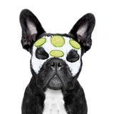 Hundebadekurort Wellness stockbilder