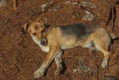 Hundebastardwelpe Lizenzfreies Stockbild