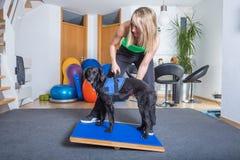 Hundebehandlung Lizenzfreie Stockfotografie