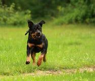 Hundebetrieb Stockfoto