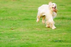 Hundebetrieb Stockbild