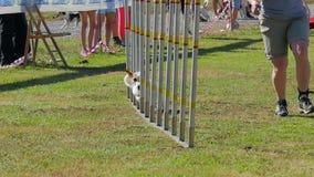 Hundebeweglichkeit stock video footage