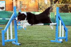 Hundebeweglichkeit lizenzfreies stockbild