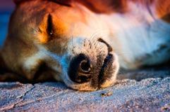 Hundedetails Lizenzfreie Stockfotografie