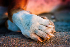 Hundedetails Lizenzfreies Stockfoto
