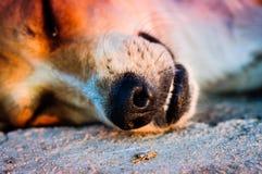 Hundedetails Stockfotos