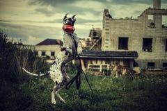 HundeDeutsche Dogge in einem Sprung fängt ein Spielzeug ab Lizenzfreie Stockfotografie