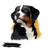 Hundedigitale Kunstillustration Appenzeller Sennenhund lokalisiert auf Weiß Regionale Zucht der mittelgroßen Zucht von Sennenhund Stockfoto