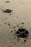 Hundedrucke im Sandfoto stockbild