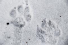 Hundedrucke im Schnee lizenzfreies stockbild