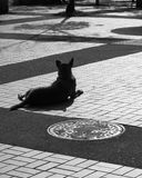 Hundeeinstellung im Park Stockfotos