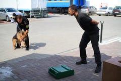 Hundeführer werden in den Zollhunden ausgebildet, um Drogen und nach Waffen zu suchen Lizenzfreies Stockfoto