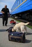 Hundeführer werden in den Zollhunden ausgebildet, um Drogen und nach Waffen zu suchen Lizenzfreie Stockfotos