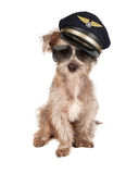 Hundeflugzeug-Pilot lizenzfreies stockbild