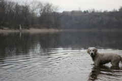 Hundeforscher lizenzfreies stockbild