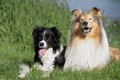 Hundefreunde Stockfoto