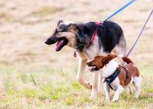 Hundefreunde heraus für einen Weg. Stockbilder