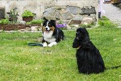 Hundefreunde im Garten Stockfotos