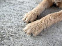 Hundefuß auf Boden Stockbild