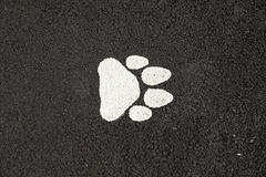 Hundefußdruck Stockfoto