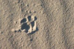 Hundefußdruck im Sand Stockfotografie
