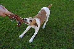 Hundegehorsam-Schule stockbilder