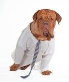 Hundegeschäftsmann Lizenzfreies Stockbild
