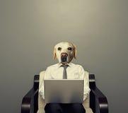 Hundegeschäftsmann mit Laptop Stockbild