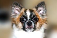 Hundegesicht Lizenzfreie Stockbilder