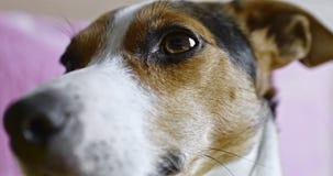 Hundegesichtsnahaufnahme stock footage