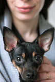 Hundegesichtsnahaufnahme mit liebevollem Eigentümer auf Hintergrund lizenzfreie stockfotografie