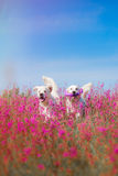 Hundegolden retriever in den Blumen Stockfoto