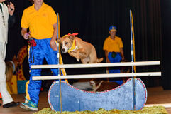 Hundehürden Stockfoto