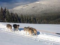 Hundehüttehülse auf Schnee Stockbilder