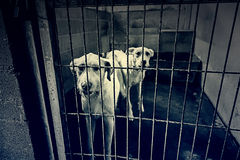 Hundehüttenhunde zusammen Stockbilder