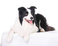 Hundehaustier Rand-Collie lizenzfreies stockbild